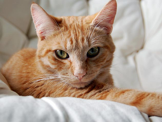 91225747-feline-leukemia-felv-facts-632x475.jpg